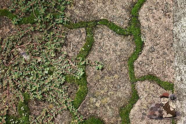 6 maneras de utilizar Groundcovers